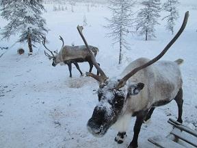 В Москве перестали тормозить реестр коренных малочисленных народов Севера